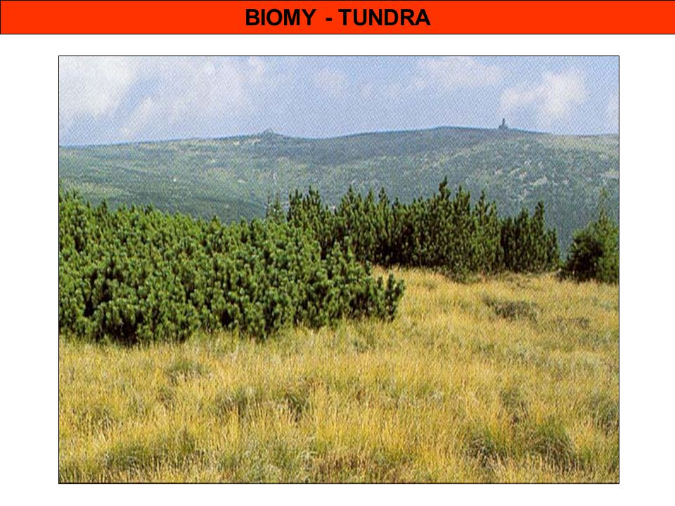 BIOMY - TUNDRA