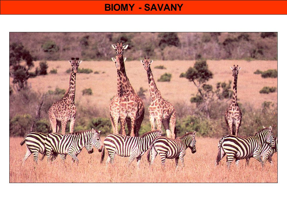BIOMY - SAVANY