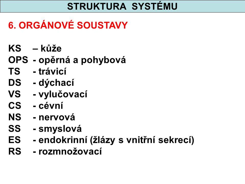 STRUKTURA SYSTÉMU 6. ORGÁNOVÉ SOUSTAVY. KS – kůže. OPS - opěrná a pohybová. TS - trávicí. DS - dýchací.