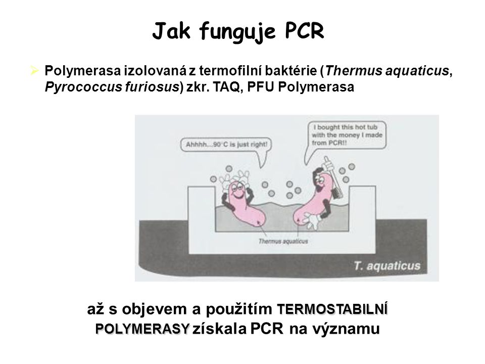 Jak funguje PCR Polymerasa izolovaná z termofilní baktérie (Thermus aquaticus, Pyrococcus furiosus) zkr. TAQ, PFU Polymerasa.
