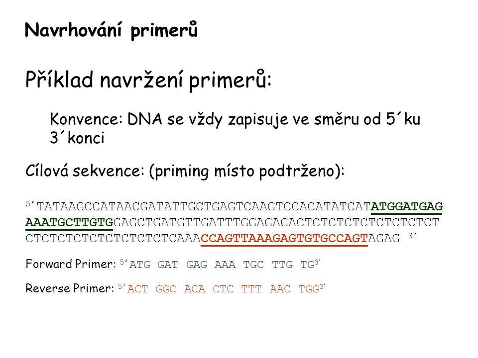 Příklad navržení primerů: