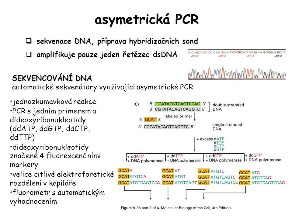 asymetrická PCR sekvenace DNA, příprava hybridizačních sond