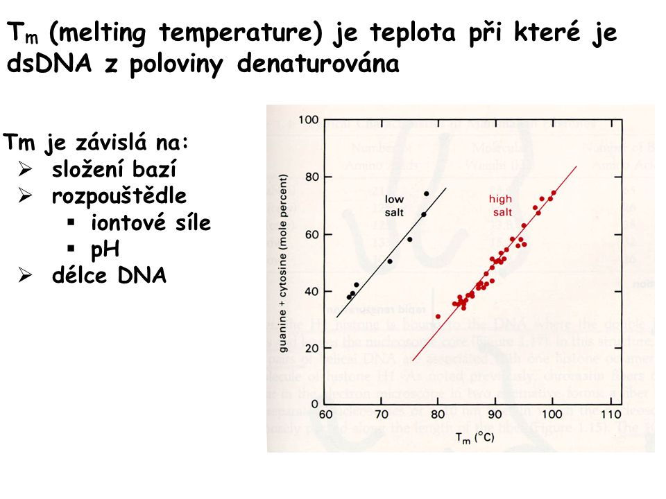 Tm (melting temperature) je teplota při které je dsDNA z poloviny denaturována