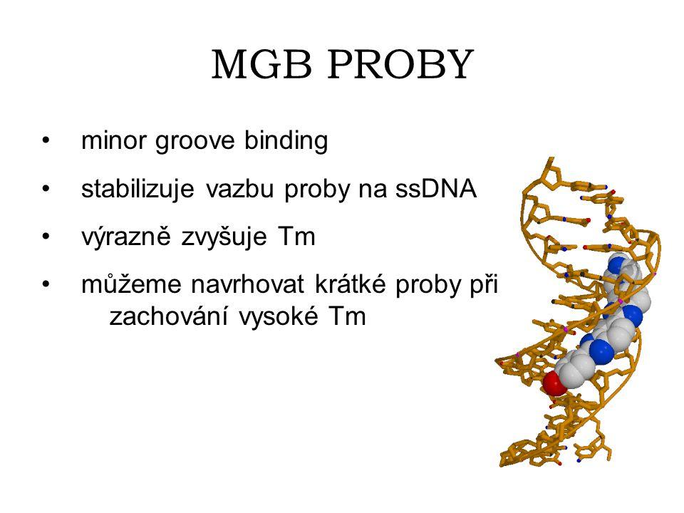 MGB PROBY minor groove binding stabilizuje vazbu proby na ssDNA
