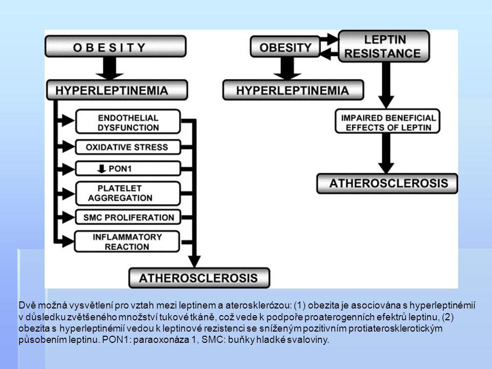 Dvě možná vysvětlení pro vztah mezi leptinem a aterosklerózou: (1) obezita je asociována s hyperleptinémií v důsledku zvětšeného množství tukové tkáně, což vede k podpoře proaterogenních efektrů leptinu, (2) obezita s hyperleptinémií vedou k leptinové rezistenci se sníženým pozitivním protiaterosklerotickým působením leptinu.