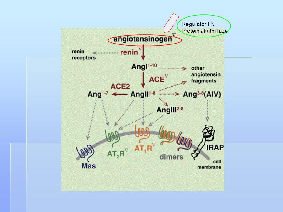 Regulátor TK Protein akutní fáze