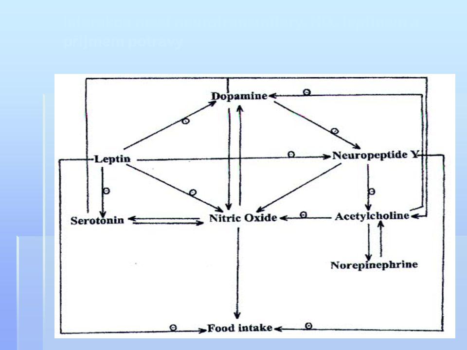 Interakce mezi neurotransmitery, NO, leptinem a příjmem potravy