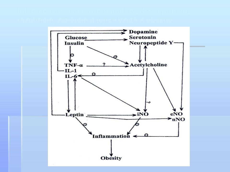 Interakce mezi neurotransmitery, NO, leptinem,