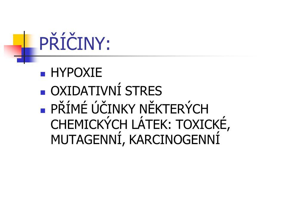 PŘÍČINY: HYPOXIE OXIDATIVNÍ STRES