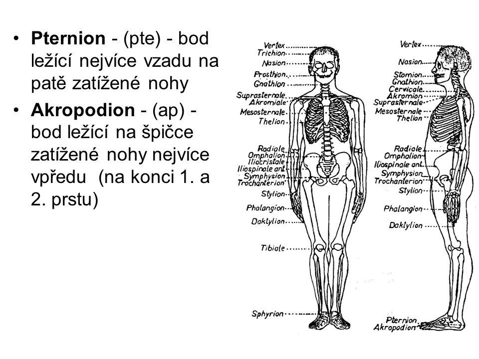 Pternion - (pte) - bod ležící nejvíce vzadu na patě zatížené nohy