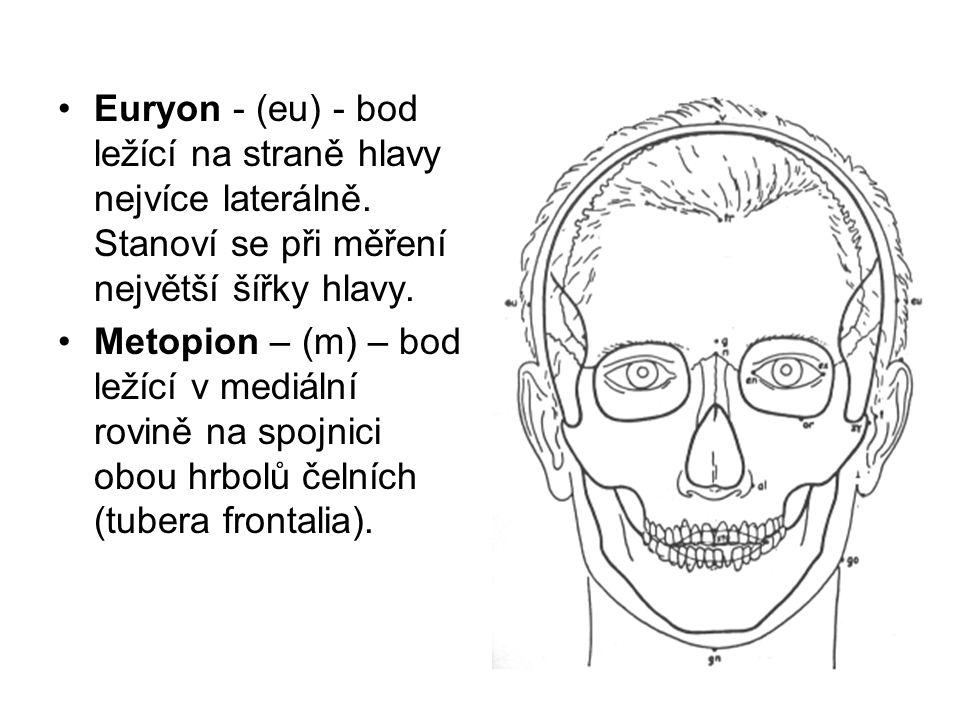 Euryon - (eu) - bod ležící na straně hlavy nejvíce laterálně