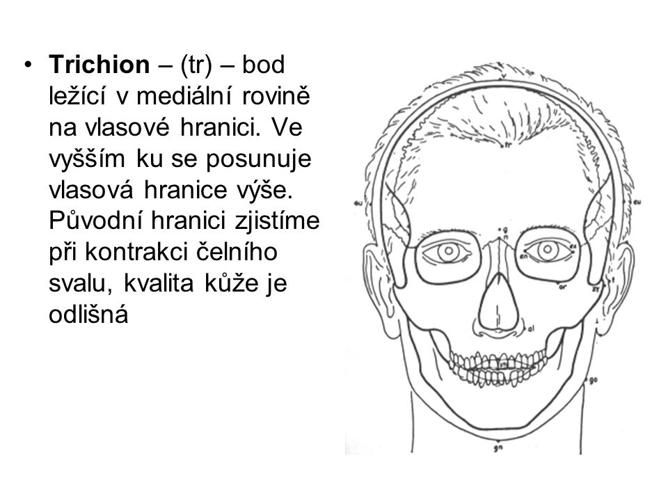 Trichion – (tr) – bod ležící v mediální rovině na vlasové hranici
