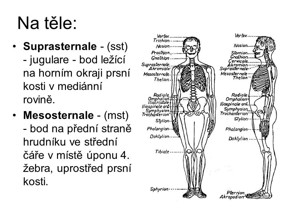 Na těle: Suprasternale - (sst) - jugulare - bod ležící na horním okraji prsní kosti v mediánní rovině.