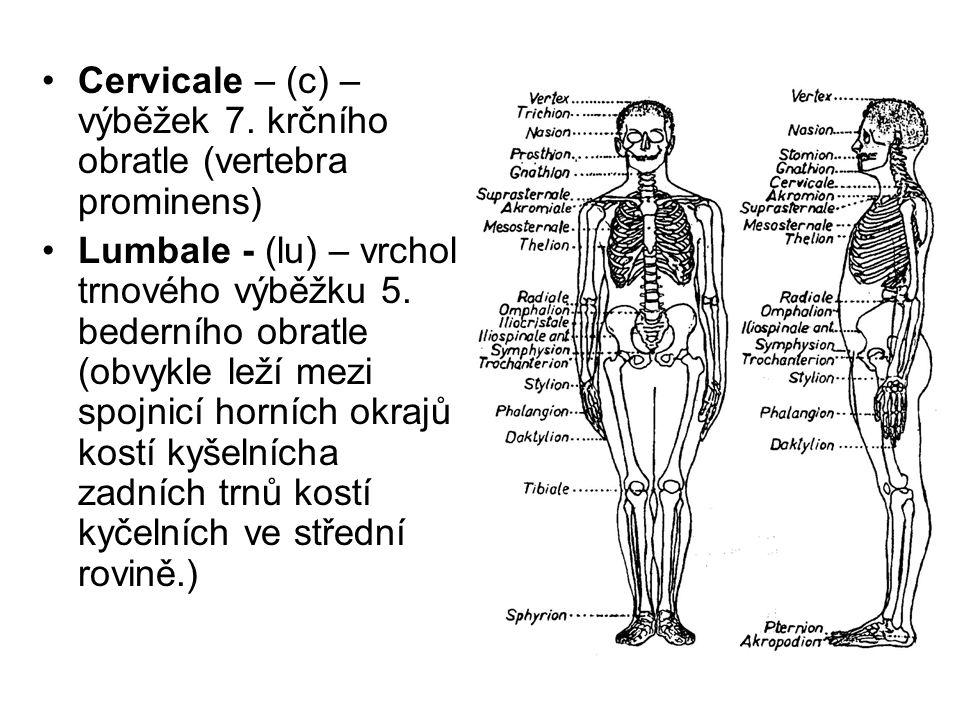 Cervicale – (c) – výběžek 7. krčního obratle (vertebra prominens)