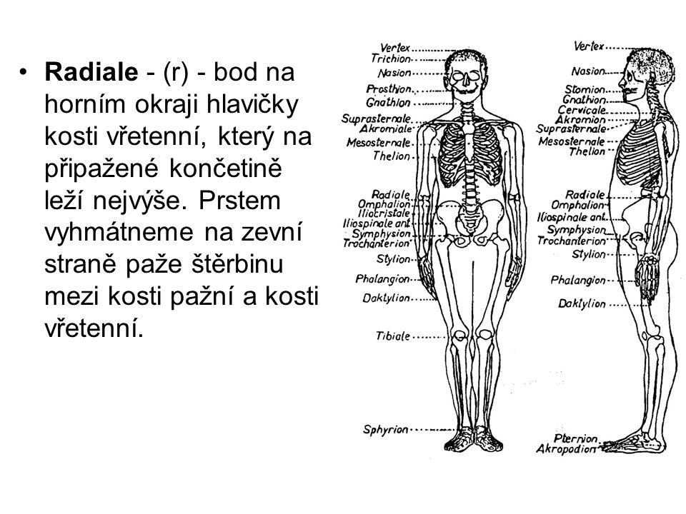 Radiale - (r) - bod na horním okraji hlavičky kosti vřetenní, který na připažené končetině leží nejvýše.