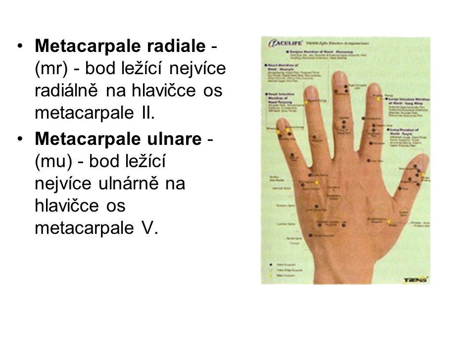 Metacarpale radiale - (mr) - bod ležící nejvíce radiálně na hlavičce os metacarpale II.
