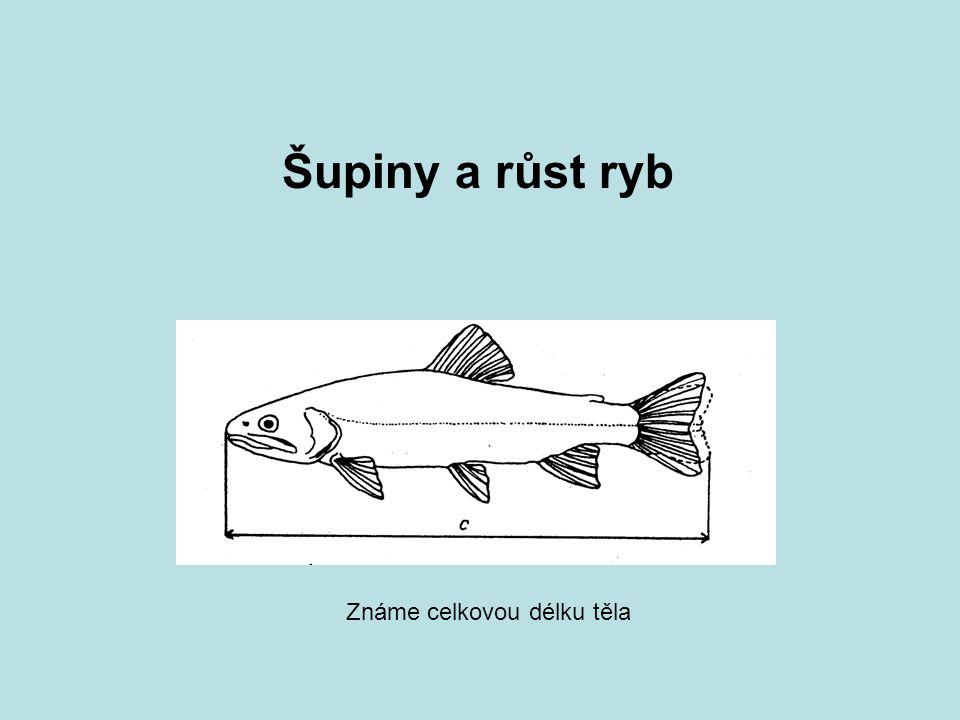 Šupiny a růst ryb Známe celkovou délku těla
