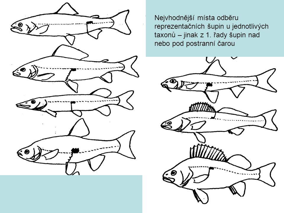 Nejvhodnější místa odběru reprezentačních šupin u jednotlivých taxonů – jinak z 1.