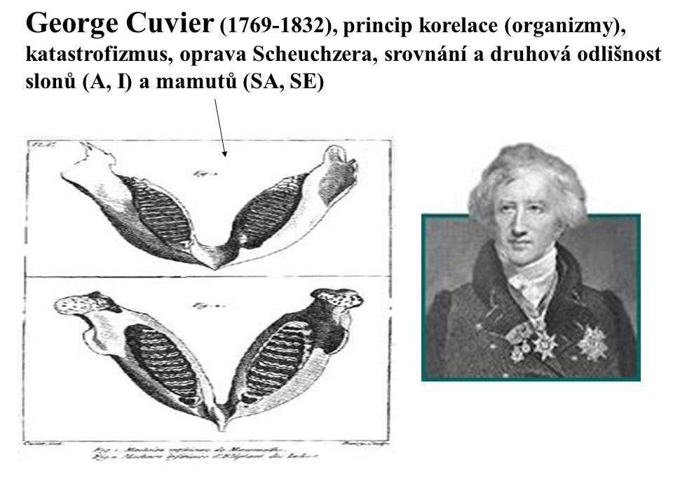 George Cuvier (1769-1832), princip korelace (organizmy),