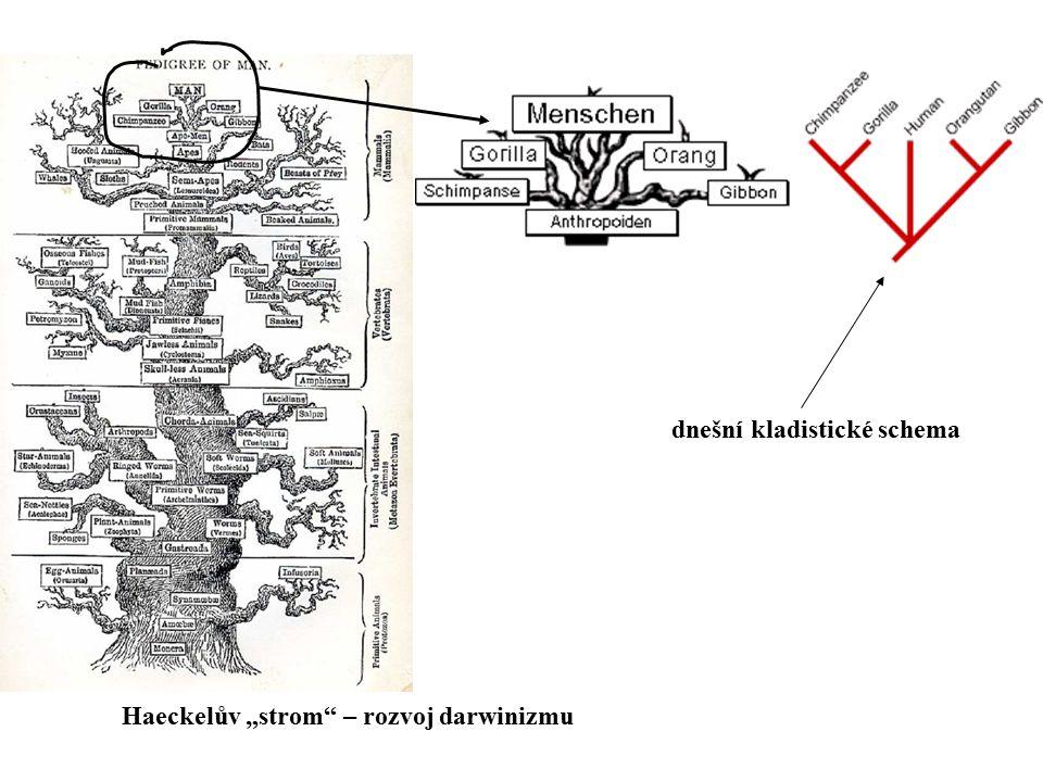 dnešní kladistické schema