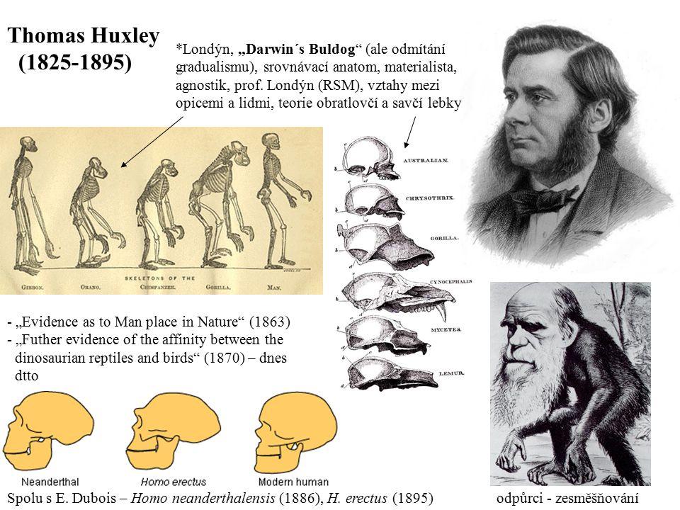 """Thomas Huxley (1825-1895) *Londýn, """"Darwin´s Buldog (ale odmítání"""