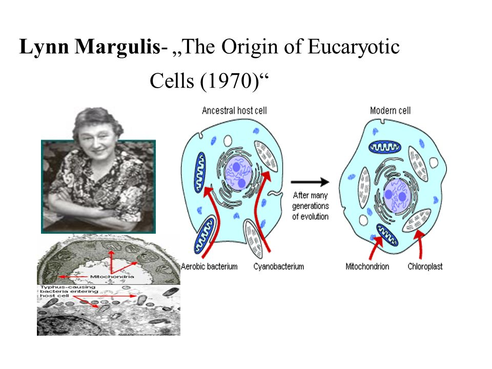 "Lynn Margulis- ""The Origin of Eucaryotic Cells (1970)"