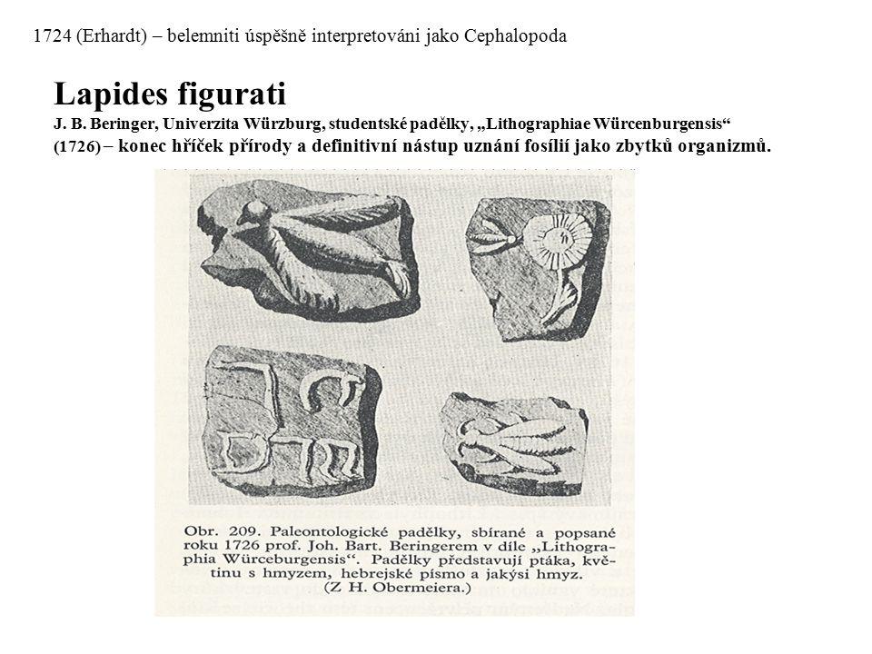 1724 (Erhardt) – belemniti úspěšně interpretováni jako Cephalopoda