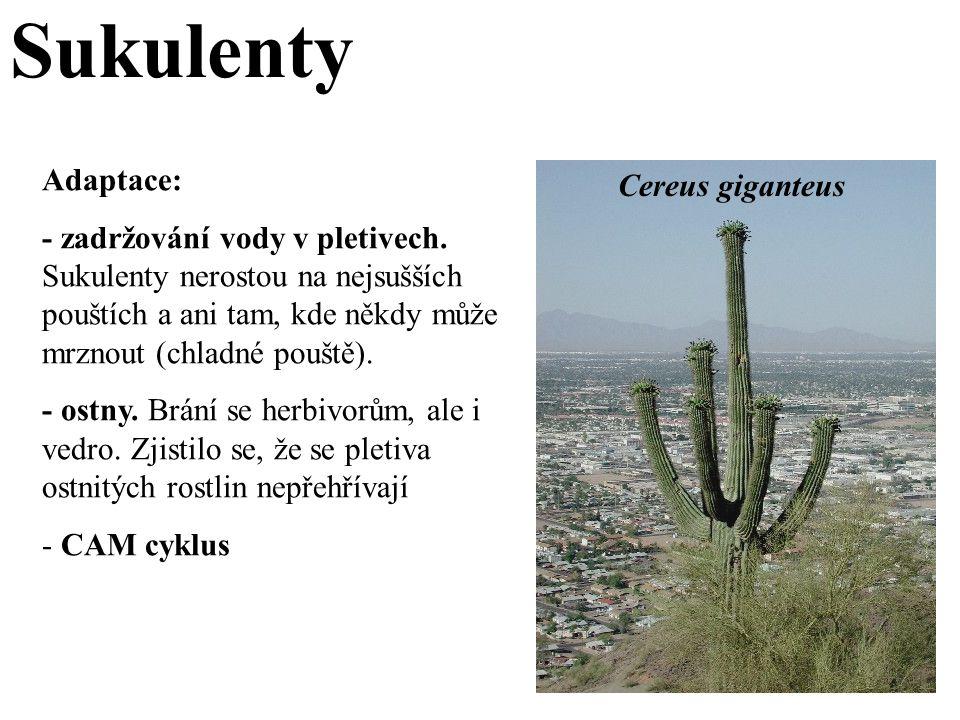 Sukulenty Adaptace: Cereus giganteus