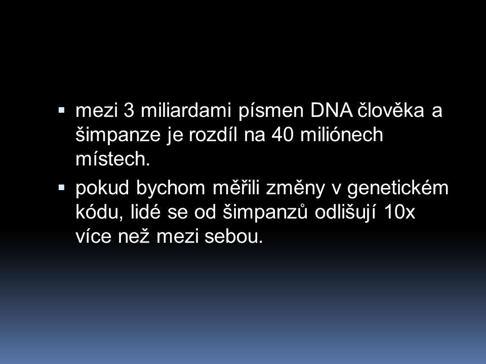 mezi 3 miliardami písmen DNA člověka a šimpanze je rozdíl na 40 miliónech místech.
