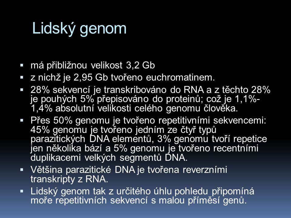 Lidský genom má přibližnou velikost 3,2 Gb