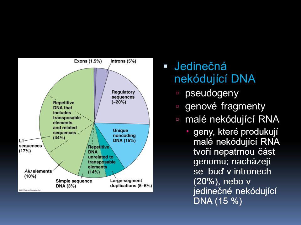 Jedinečná nekódující DNA
