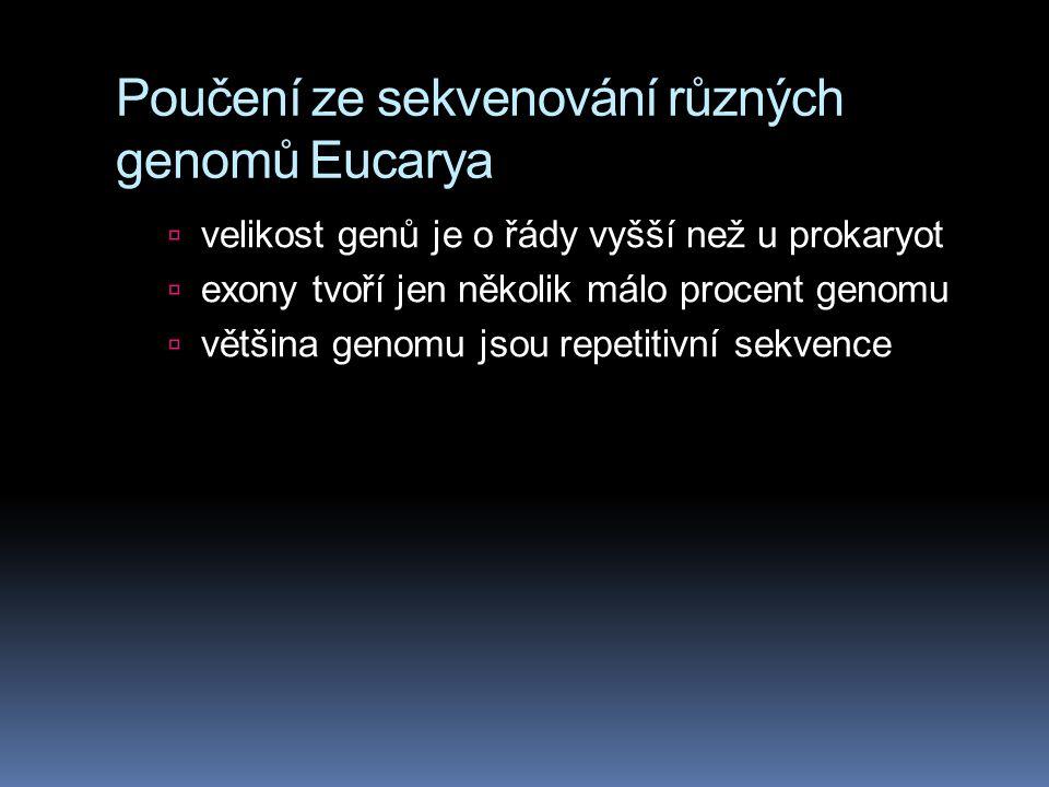 Poučení ze sekvenování různých genomů Eucarya