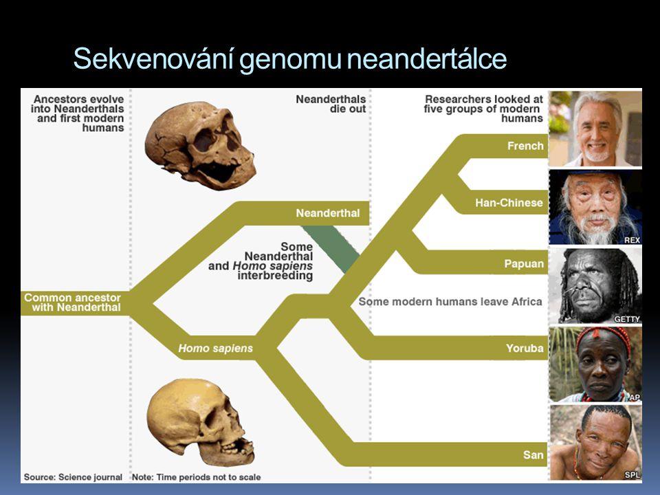 Sekvenování genomu neandertálce