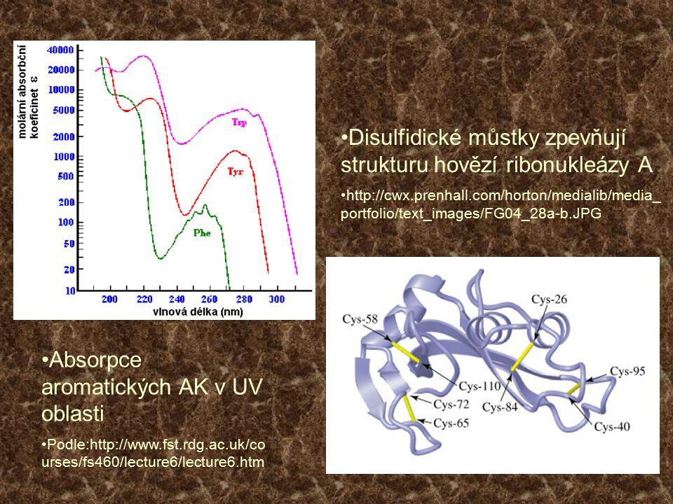 Disulfidické můstky zpevňují strukturu hovězí ribonukleázy A