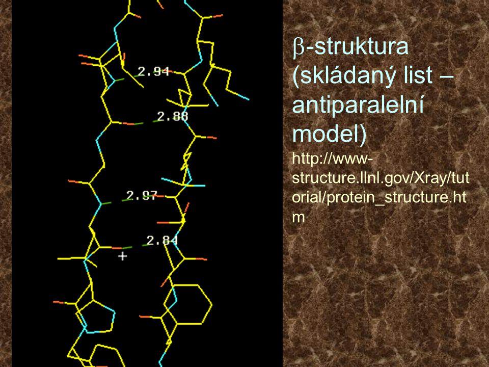 b-struktura (skládaný list – antiparalelní model) http://www-structure