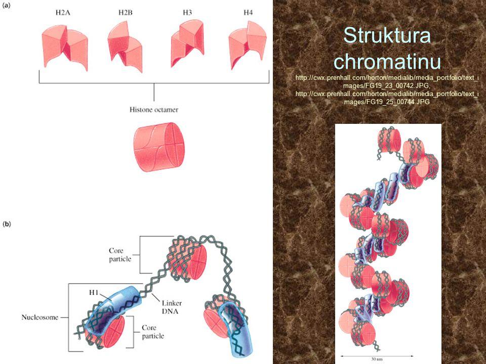 Struktura chromatinu http://cwx. prenhall