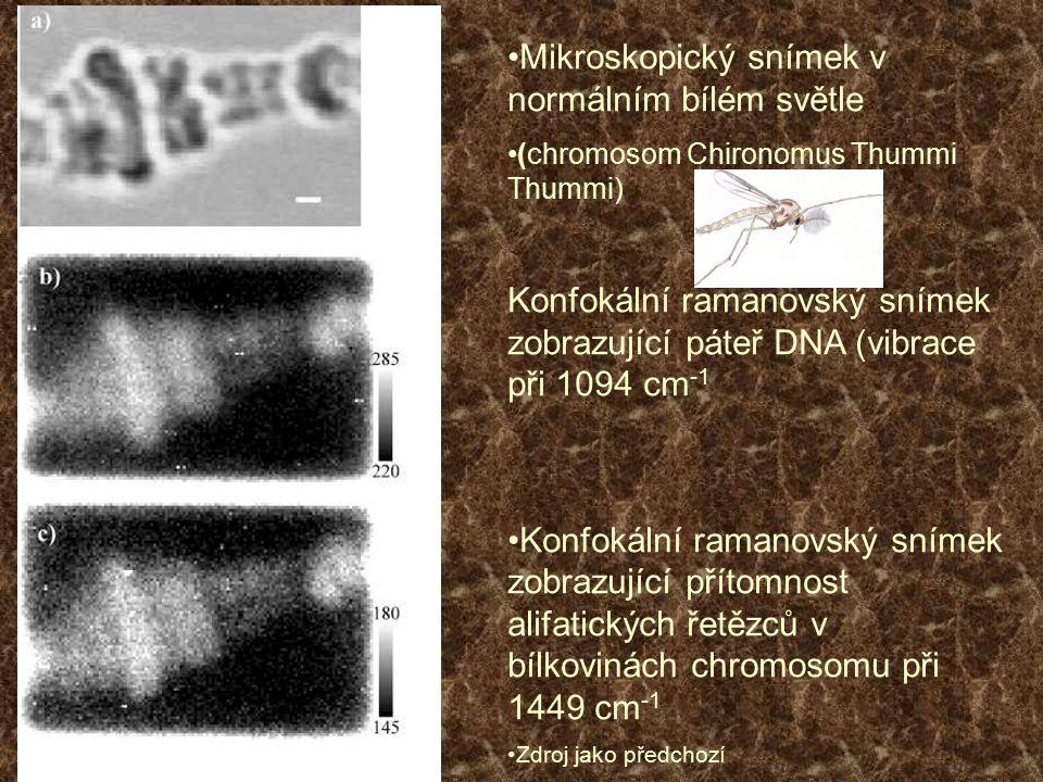 Mikroskopický snímek v normálním bílém světle