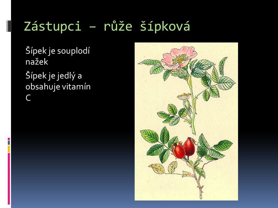 Zástupci – růže šípková