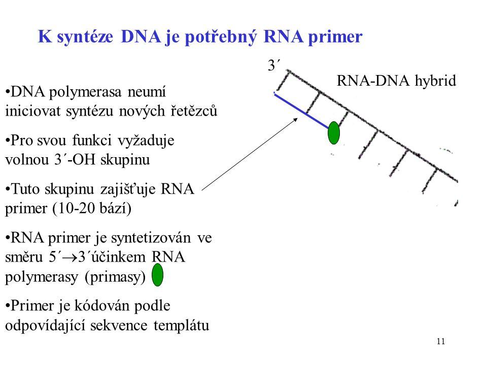 K syntéze DNA je potřebný RNA primer