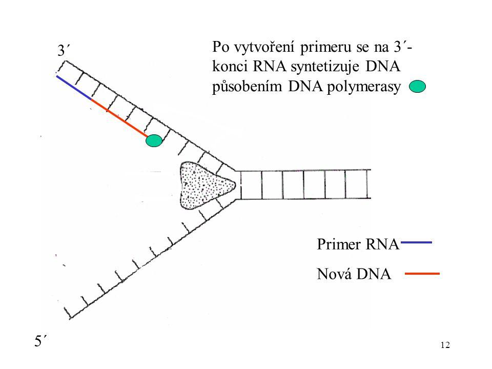 Po vytvoření primeru se na 3´-konci RNA syntetizuje DNA působením DNA polymerasy