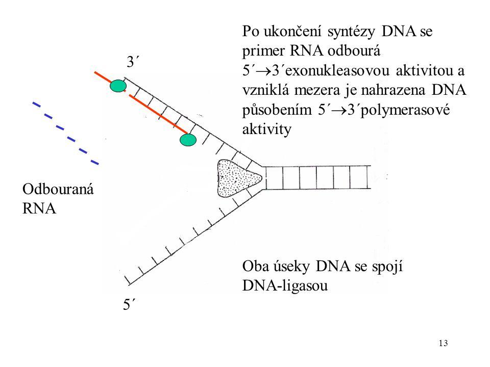 Po ukončení syntézy DNA se primer RNA odbourá 5´3´exonukleasovou aktivitou a vzniklá mezera je nahrazena DNA působením 5´3´polymerasové aktivity