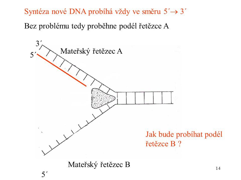 Syntéza nové DNA probíhá vždy ve směru 5´ 3´