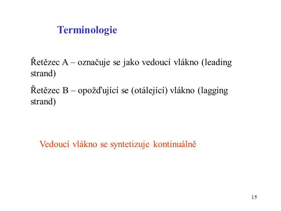 Terminologie Řetězec A – označuje se jako vedoucí vlákno (leading strand) Řetězec B – opožďující se (otálející) vlákno (lagging strand)