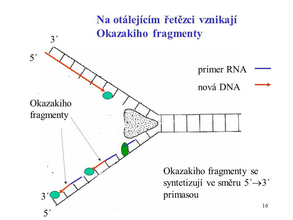 Na otálejícím řetězci vznikají Okazakiho fragmenty