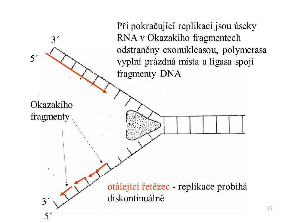 Při pokračující replikaci jsou úseky RNA v Okazakiho fragmentech odstraněny exonukleasou, polymerasa vyplní prázdná místa a ligasa spojí fragmenty DNA