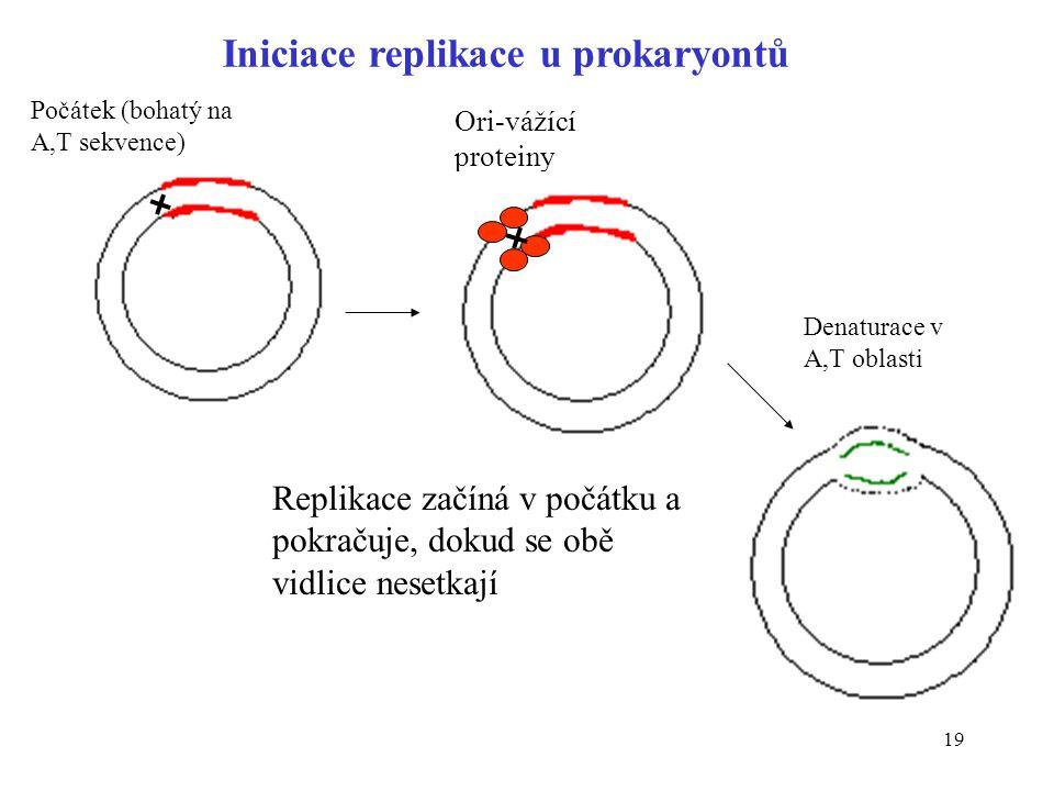 Iniciace replikace u prokaryontů