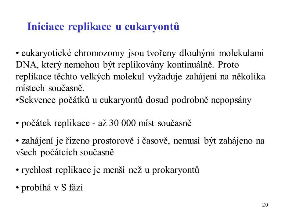 Iniciace replikace u eukaryontů