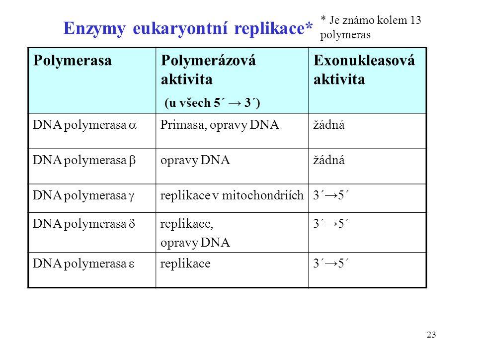Enzymy eukaryontní replikace*