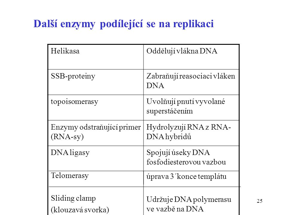Další enzymy podílející se na replikaci