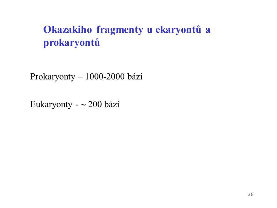 Okazakiho fragmenty u ekaryontů a prokaryontů